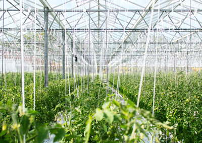 Free water for agriculture and green house